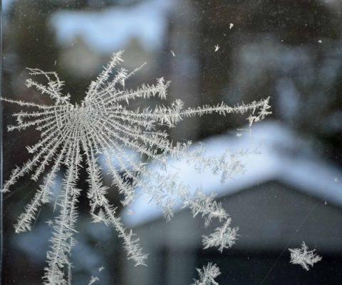frost web
